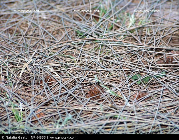 textura-de-pinocha-en-el-suelo-del-bosque_64855.jpg