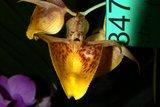th_SOEM_2011_003.jpg