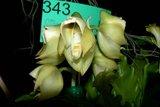 th_SOEM_2011_004.jpg