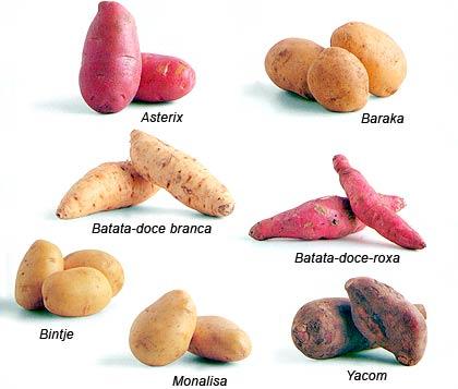 tipos-de-batatas.jpg