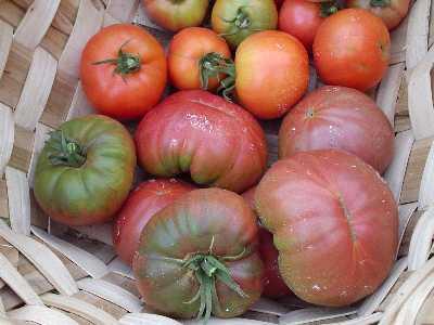 tomate morado cesta.JPG