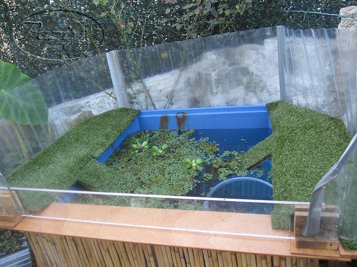 Fotos de mi estanque para las tortugas for Construir estanque