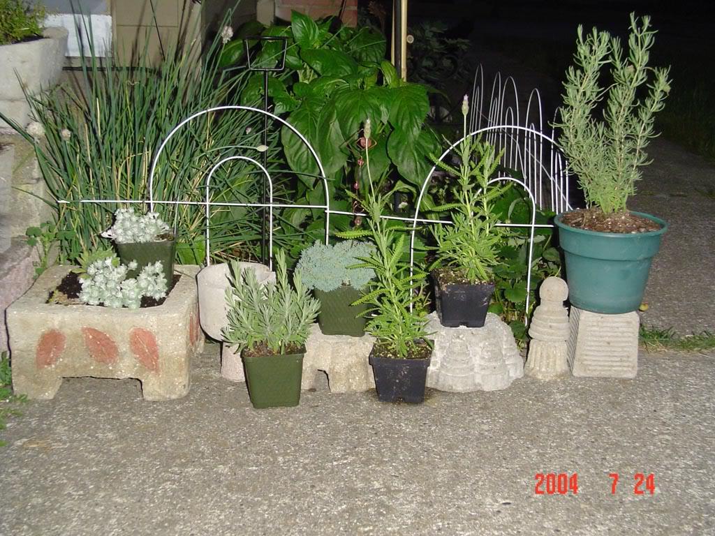 tufaandplants.jpg