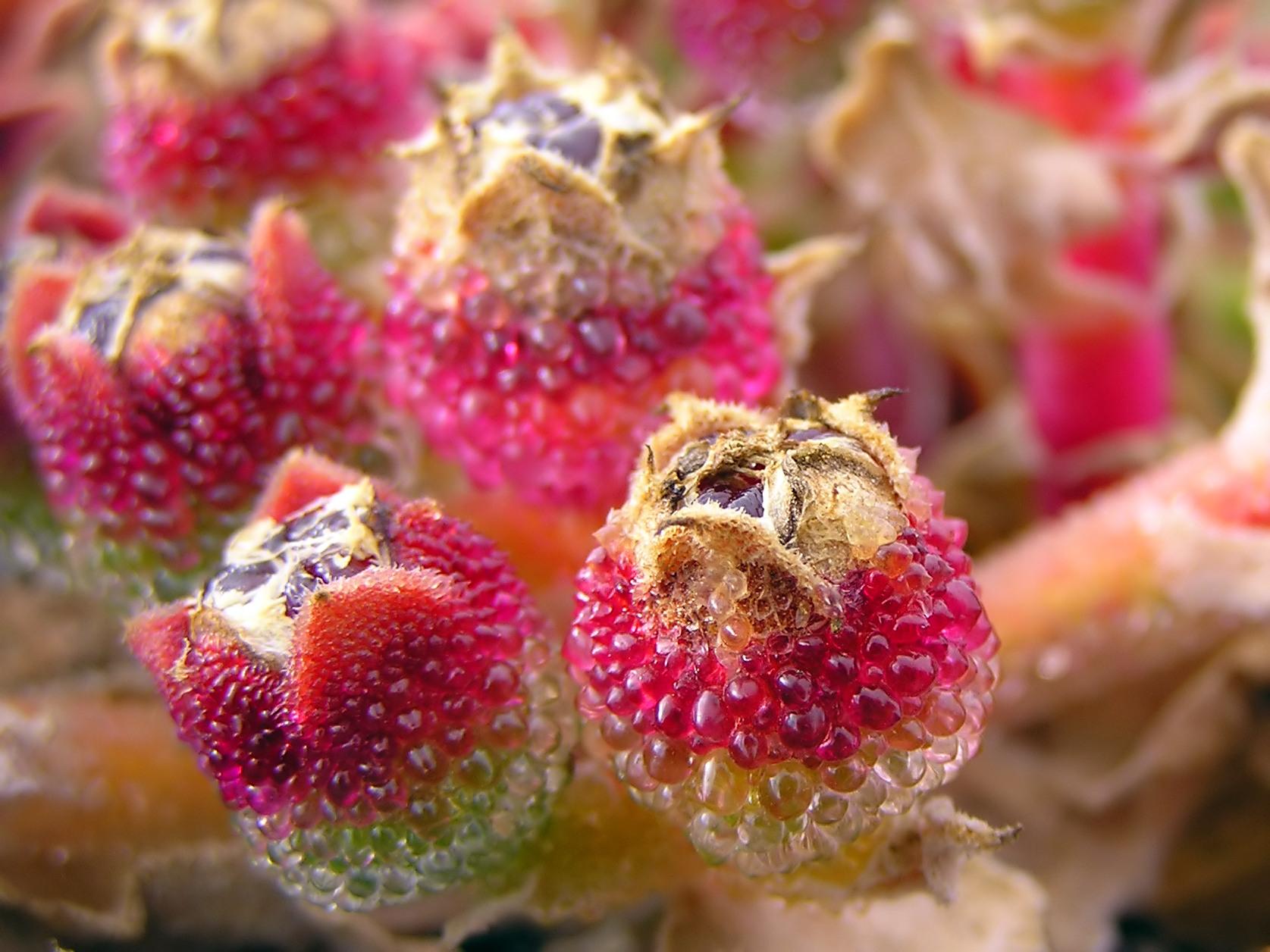 Unk_desert_flower_3.jpg