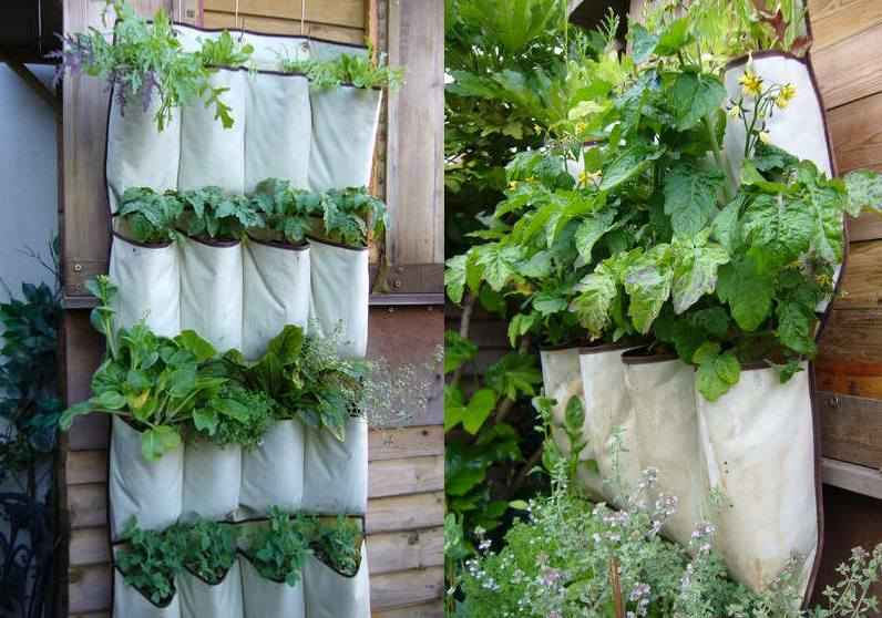 vertical-garden-from-shoe-organizer.jpg