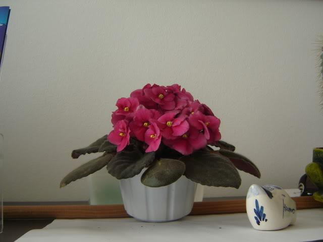 Violetas001.jpg
