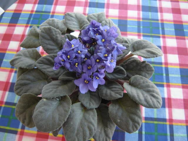 Violetas007.jpg