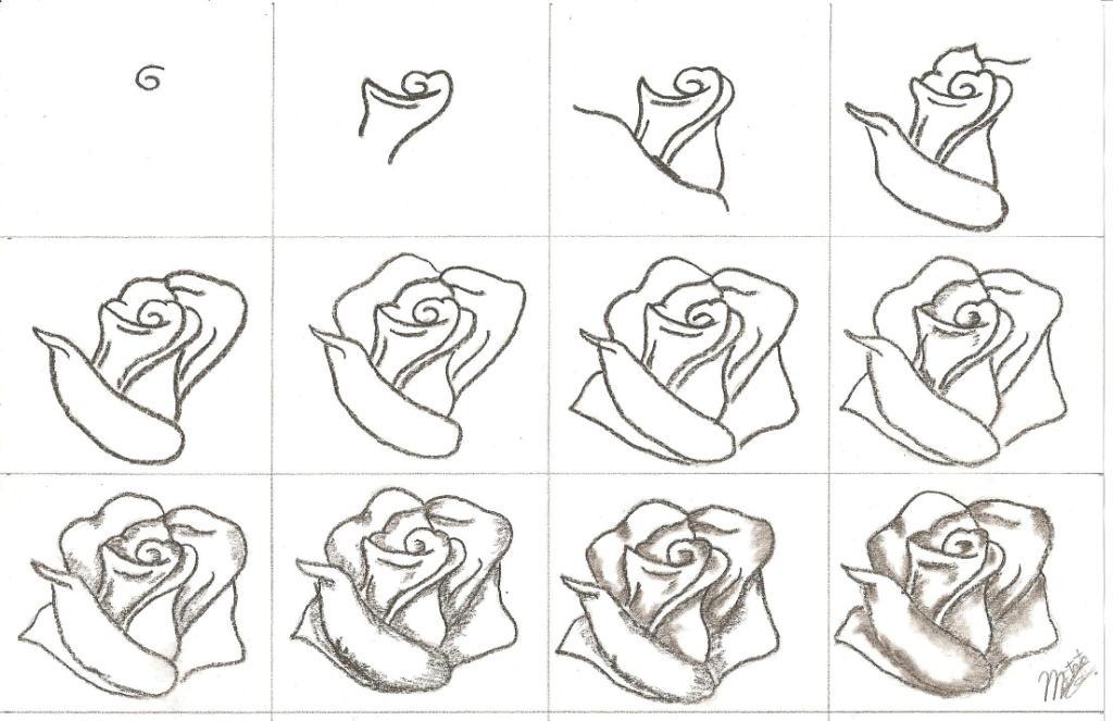 Cómo Dibujar Una Rosa Diagrama