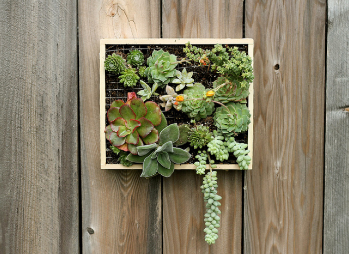 wall-mounted-succulent-garden.png