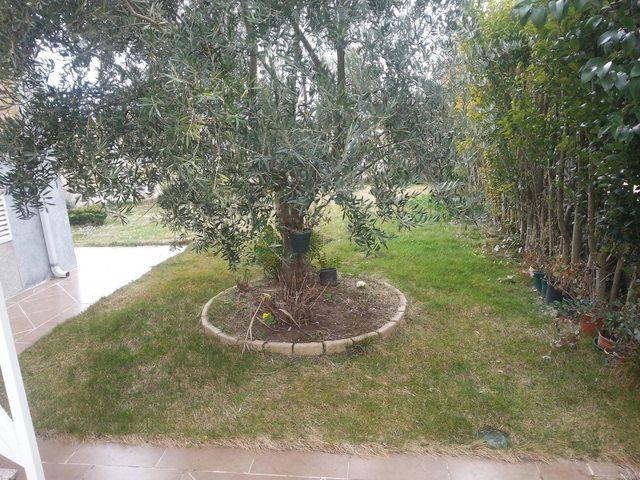 Ayuda para dise ar mi jard n en parcela de 500 m2 - Disenar mi jardin ...