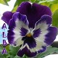 AlbaJB