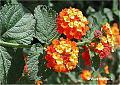 flores_teruel