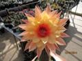 cactusero colombia