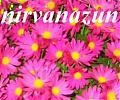 nirvanazun