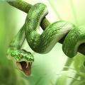 snakezoo
